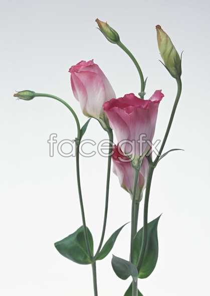 Flowers close-up 942