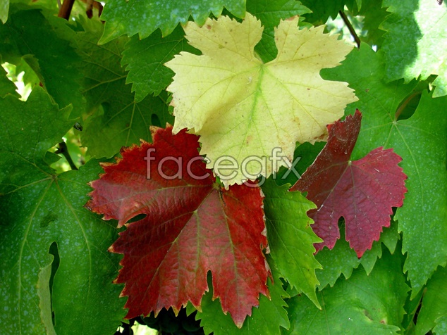 Fresh leaves material picture