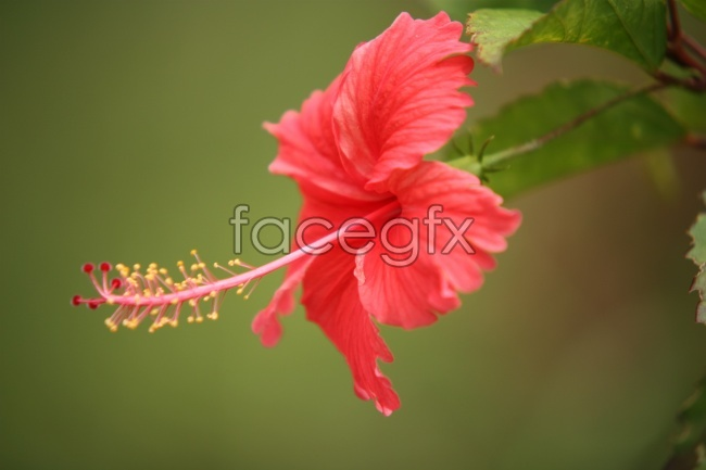 HD red flowers
