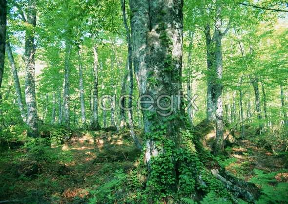 Jungle beauty 33