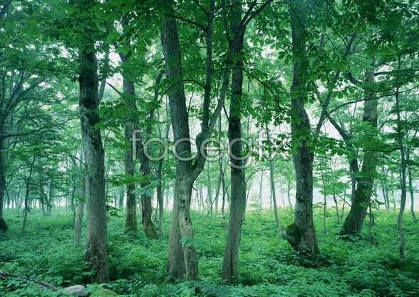 Jungle beauty of 105