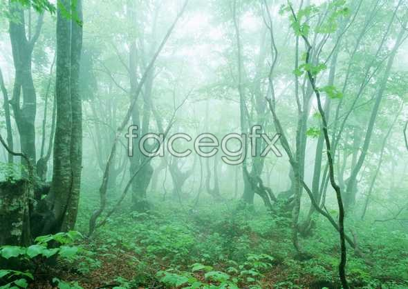 Jungle beauty of 133