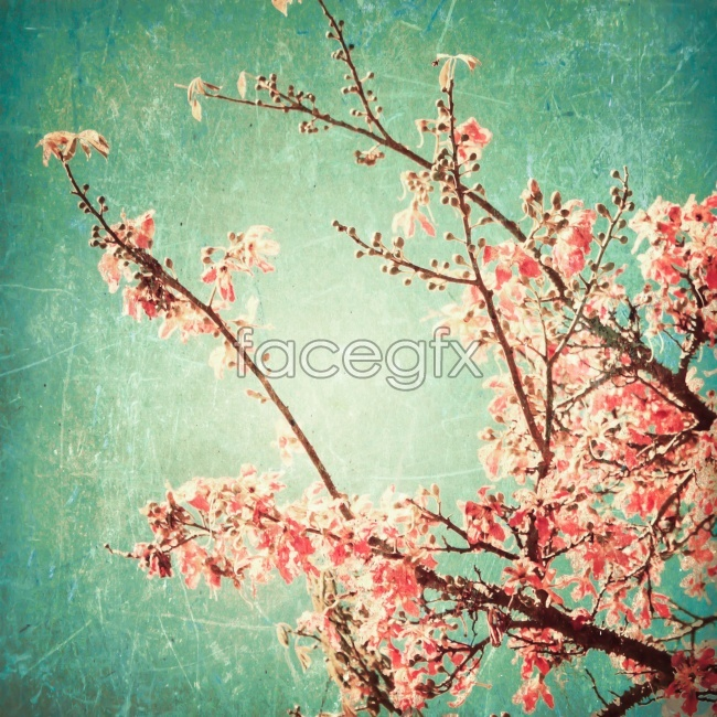 Plum blossom paintings picture