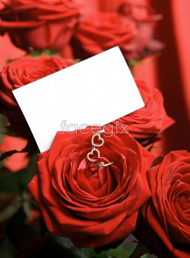 Romantic roses photos