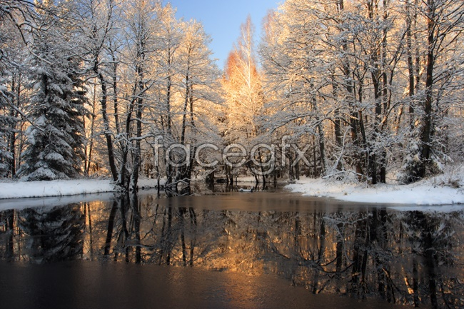 Snowmelt in forest picture