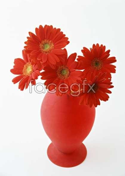 Flowers close-up 1357