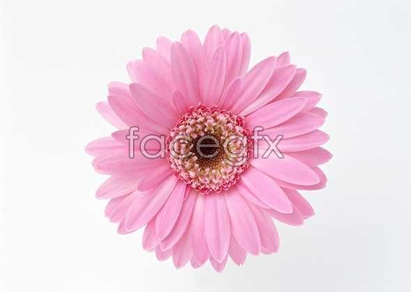 Flowers close-up 1359