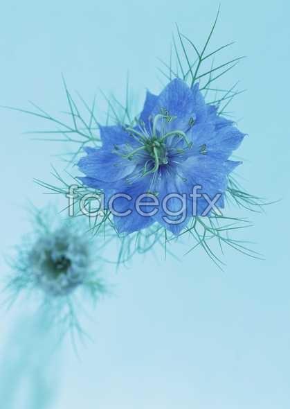 Flowers close-up 1651