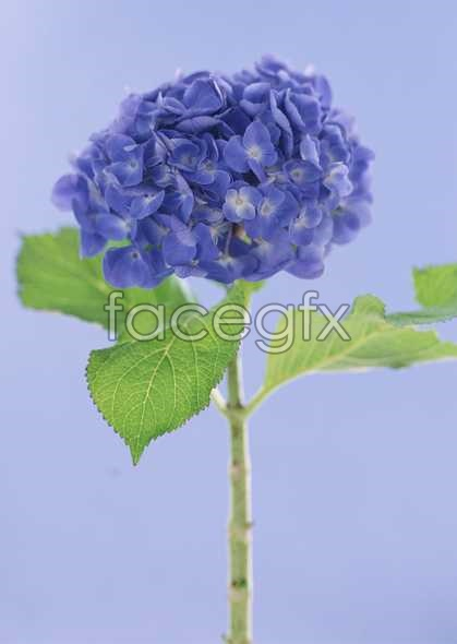 Flowers close-up 1654