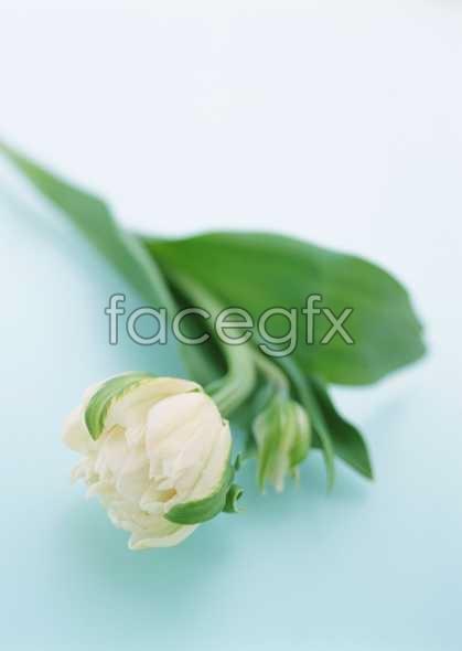 Flowers close-up 1673