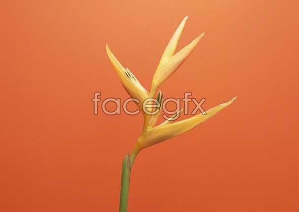 Flowers close-up 982