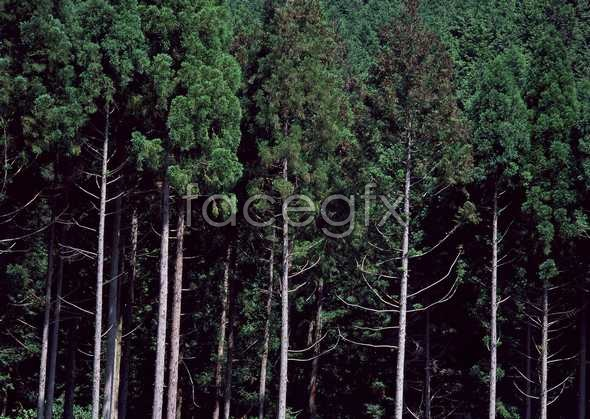 Jungle beauty of 534