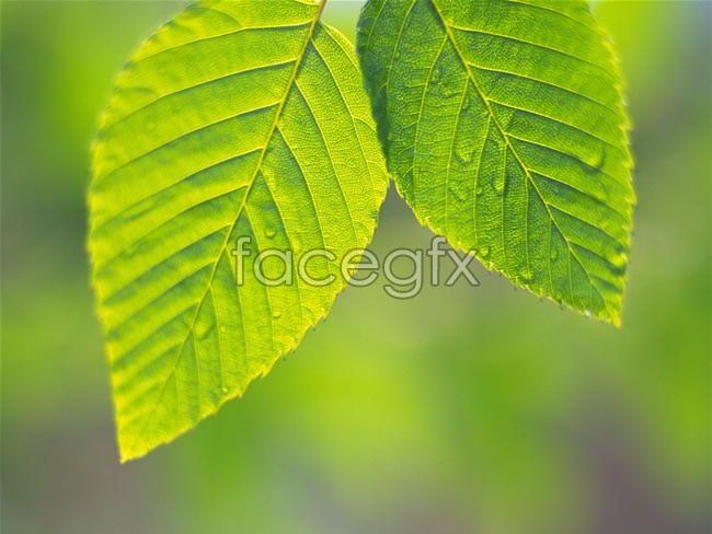 Leaves close-up picture
