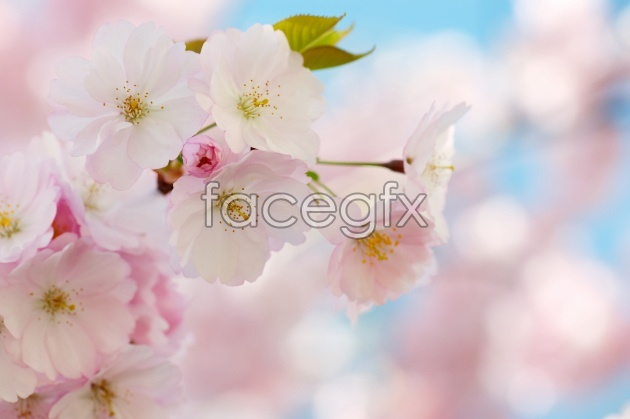 Pink flower beauty picture