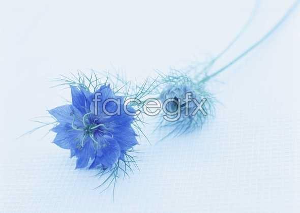 Thousand flower 798