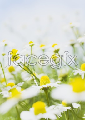 Flowers and pictures of 2,148