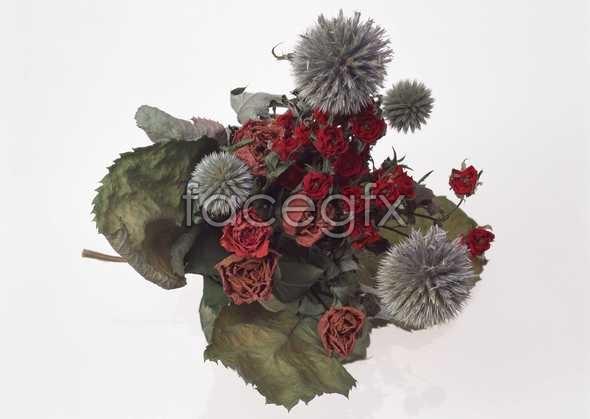 Flowers close-up 1065