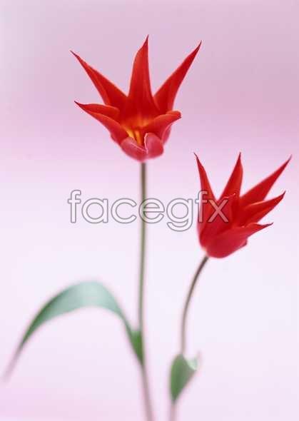Flowers close-up 1695