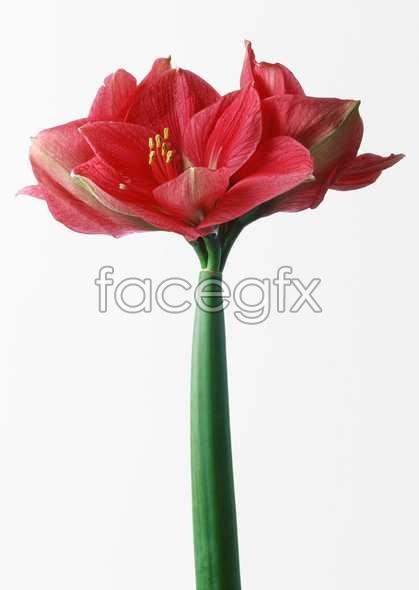 Flowers close-up 572