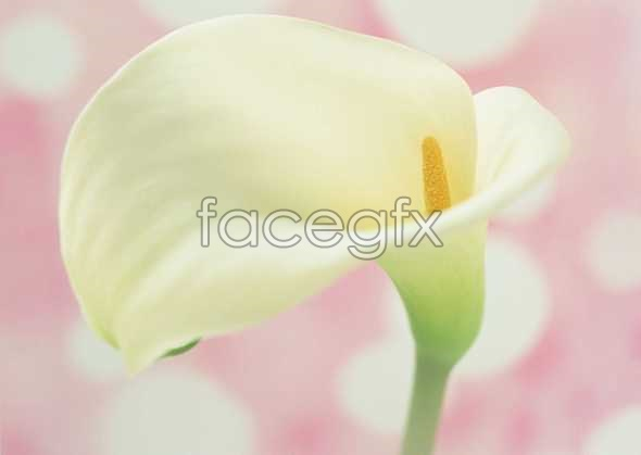 Flowers close-up 886