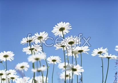 Flowers close-ups 2,106