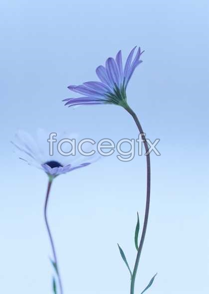Flowers close-ups of 1691