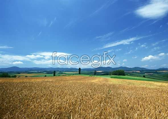 Idyllic rural 163