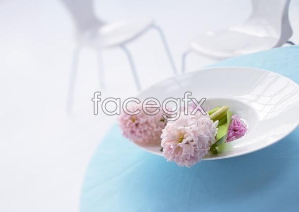 Indoor flower 10