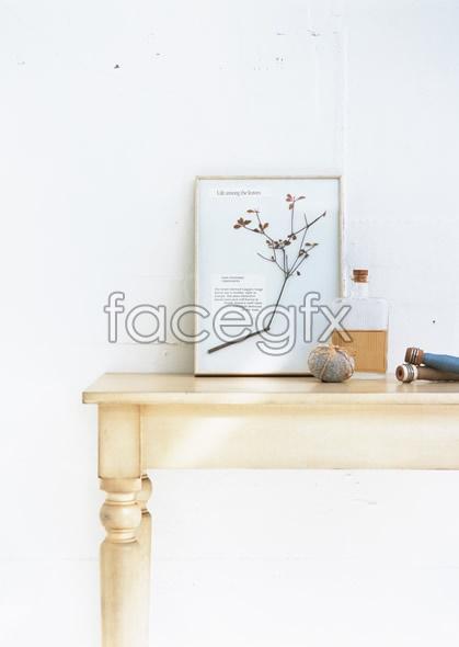 Indoor flower 141