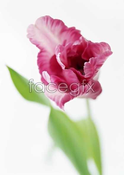 Flowers close-up 1319