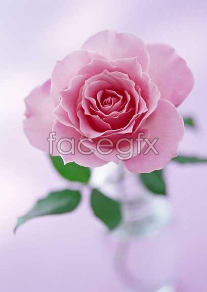 Flowers close-up 1438