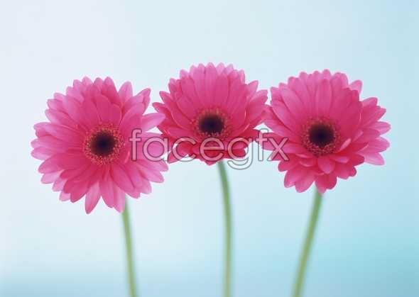 Flowers close-up 1727