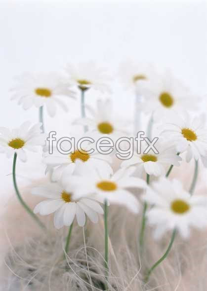 Flowers close-up 1804