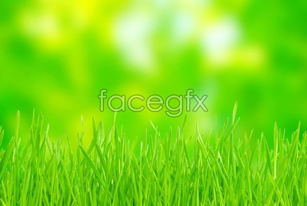 Green grass landscape picture