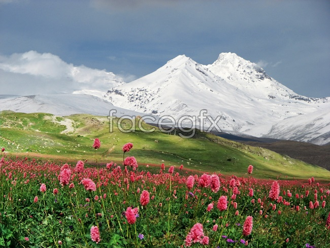 Mountain Wildflower pictures