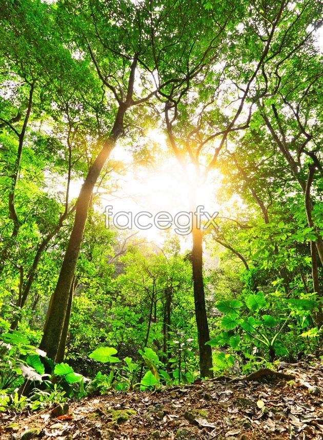 Sunshine Woods HD picture