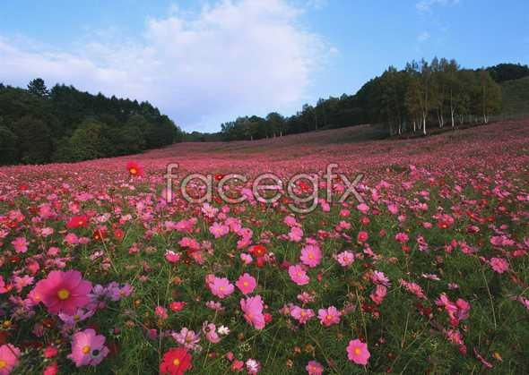 Thousands of flowers 653