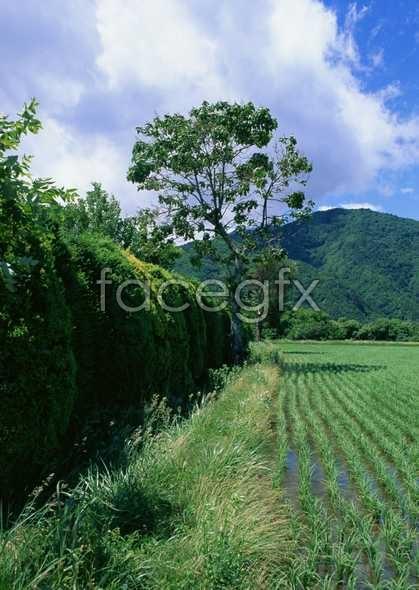 Country garden 38