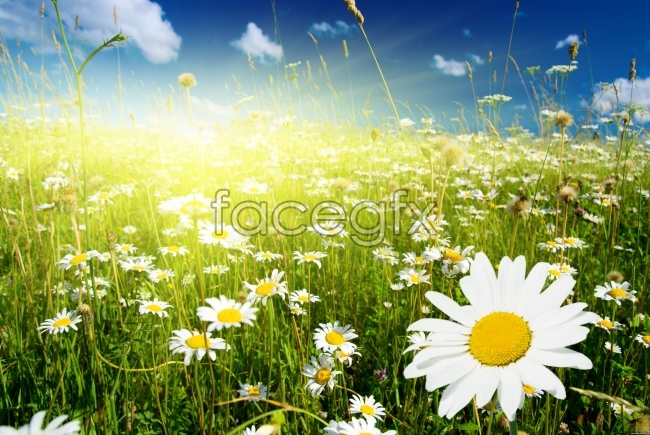 Flower landscape picture