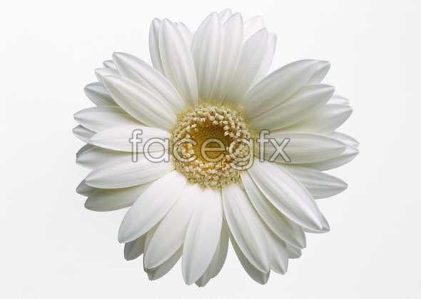 Flowers close-up 419