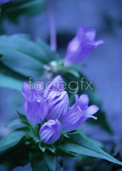 Flowers close-up 635