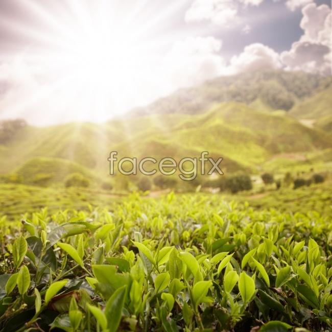 HD sunny idyllic picture