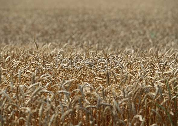 Rural pastoral 259