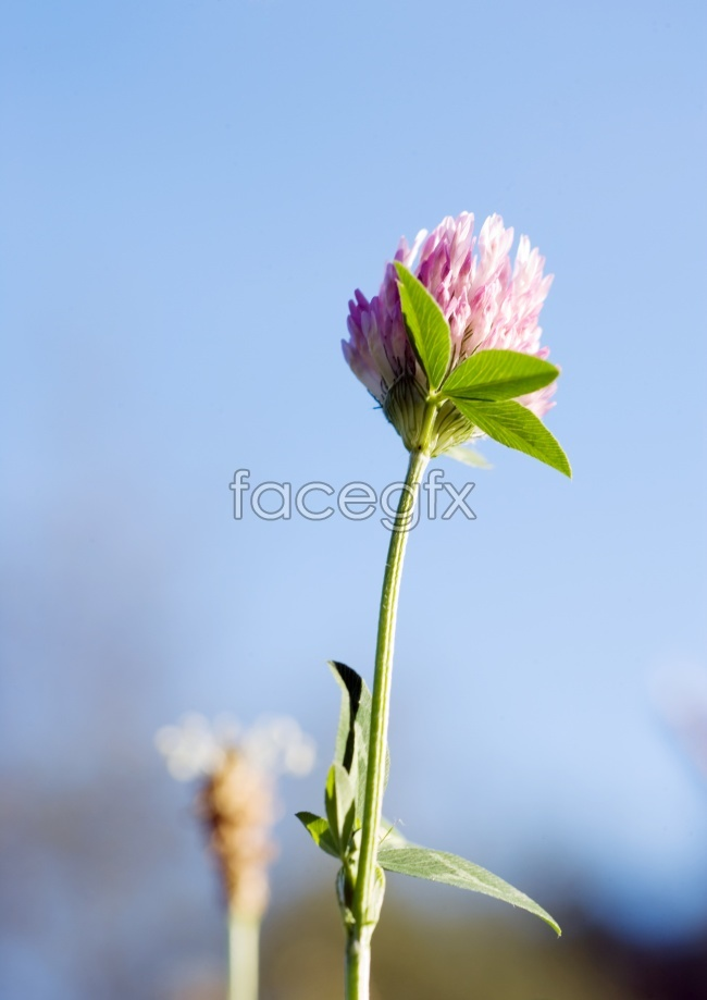 A pink flower flowers pictures