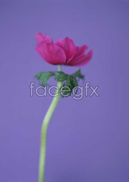 Flowers close-up 1643