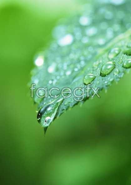 Flowers close-up 813