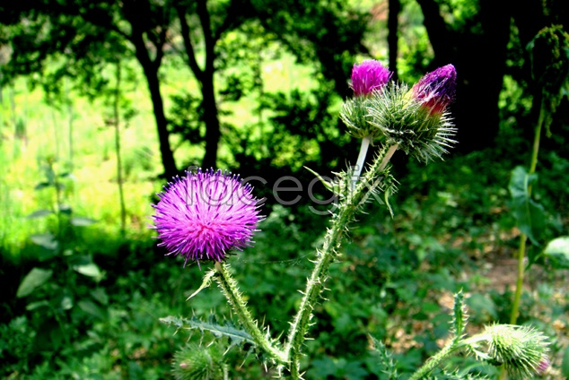 Flowers scenery picture material