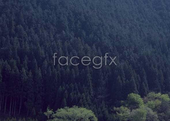 Jungle beauty of 496