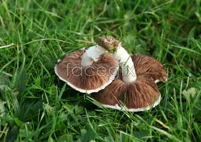 Mushrooms grow in the grass high definition pictures