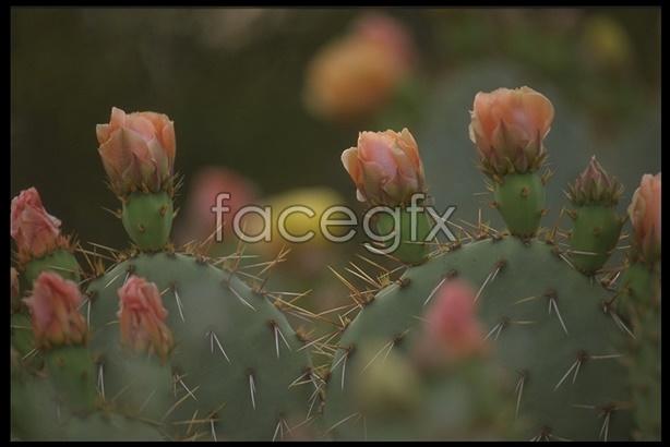 Desert wind-48